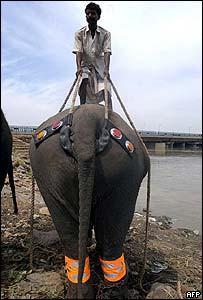Каждому слону - право на пенсию!