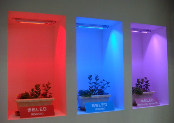 япония LED светодиоды растения цветы Nabesei
